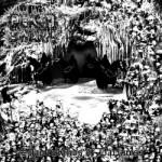 Deathswarm - Shadowlands Of Darkness